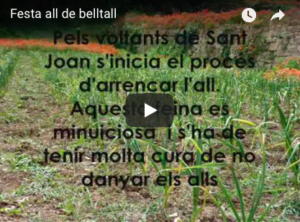 Festa de l'all de Belltall